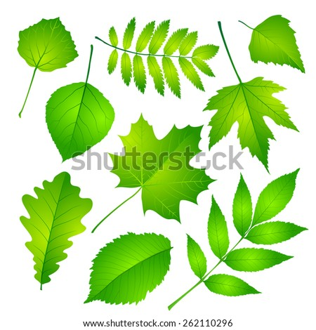 Collection of green leaves. Vector illustration Eps 10. - stock vector