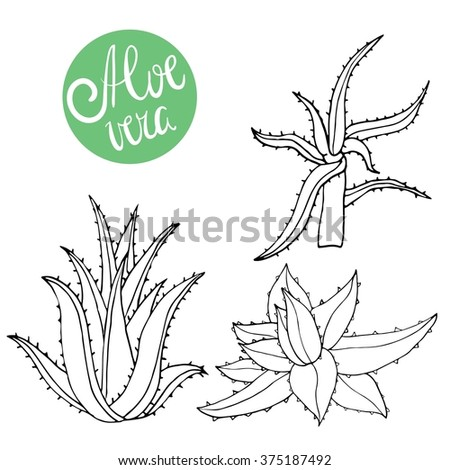 Collection of hand drawing aloe isolated on white. Vector doodle aloe vera - stock vector