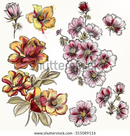 Collection of hand drawn rose and cosmos flowers in engraved and watercolor style - stock vector