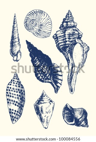 Collection of 7 hand- drawn seashells - stock vector