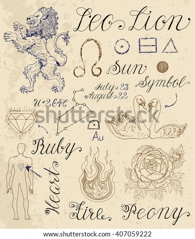 Collection of hand drawn symbols for astrological zodiac sign Lion or Leo. Line art vector illustration of engraved horoscope set. Doodle drawing and sketch with calligraphic lettering - stock vector
