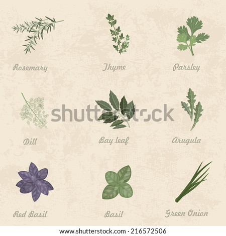 collection of herbs for you design - stock vector