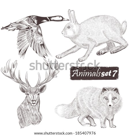 Collection  of high detailed vector animals for design - stock vector