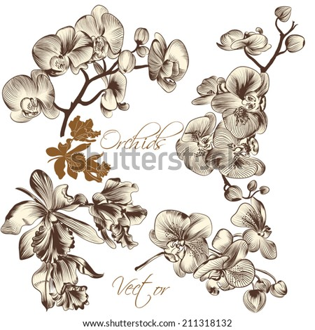 Collection of high detailed vector orchid flowers for design - stock vector