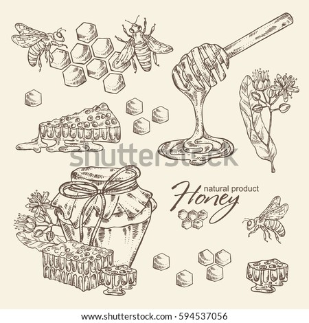 Collection of honey,  jar of honey,linden flower  and honeycomb with a bee. hand drawn