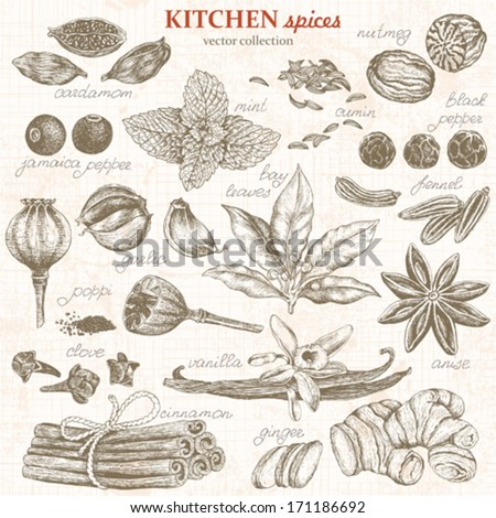 Collection of kitchen spices hand-drawn, vector illustration in vintage style. - stock vector