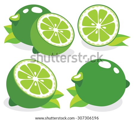 Collection of limes vector illustrations - stock vector