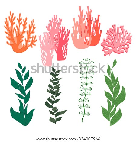 Collection of marine plants, leaves and seaweed ,coral. set hand drawn marine flora. Isolated vector illustration in line art style.Design for summer beach, decorations.Vector. EPS 10 - stock vector