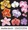 Collection of orchid flower - stock vector