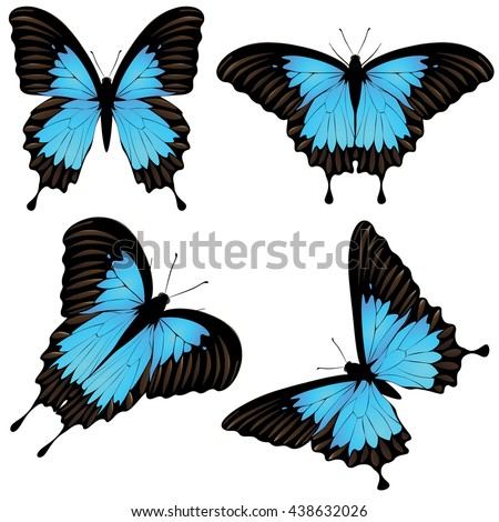 Blue Mountain Butterfly Stock Images, Royalty-Free Images ...