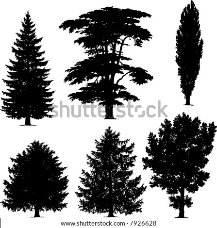 Cypress Pine Tree Stock Images, Royalty-Free Images ...