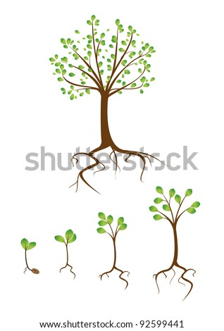 collection of trees from small to large - stock vector