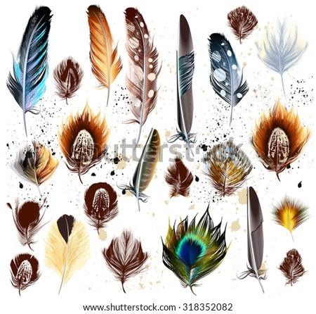 Collection of vector colorful realistic feathers - stock vector
