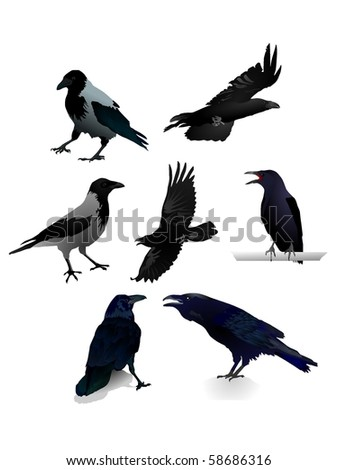 Collection of vector images a raven - stock vector