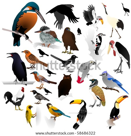 Collection of vector images of birds - stock vector