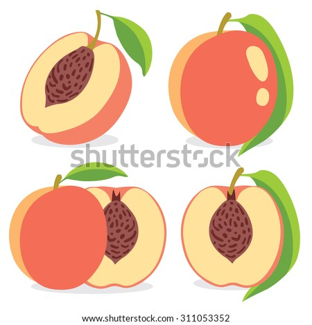 Collection of vector peaches, whole and halves - stock vector