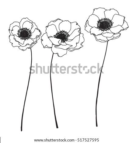 Collection Set Anemone Flower By Hand Stock Vector 2018 517527595