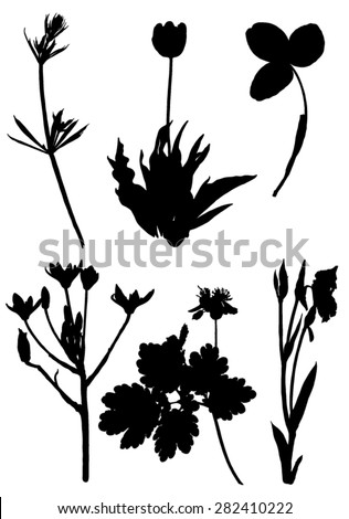 Collection silhouettes of plants and flowers