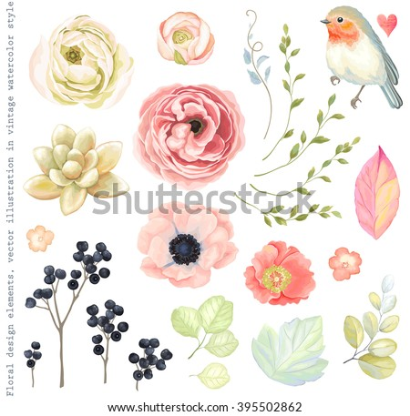Collection vector flowers ranunculus, anemone, succulent, Robin bird, wild Privet Berry, green branches and leaves in vintage watercolor style. - stock vector