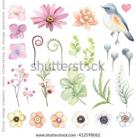 Collection vector flowers, Red-flanked Blue-tail bird, succulent, Silver Brunia, branches and leaves in vintage watercolor style.