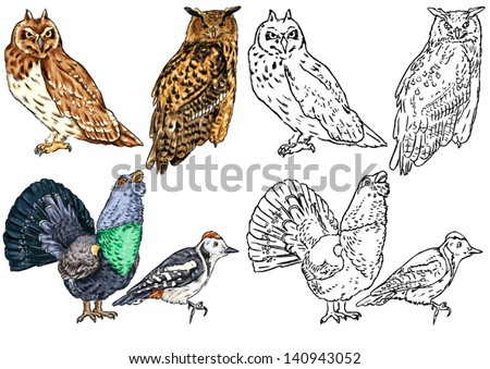 color drawing and contour of wild birds living in forests, birds of prey, owls, woodpeckers, wood grouse - stock vector