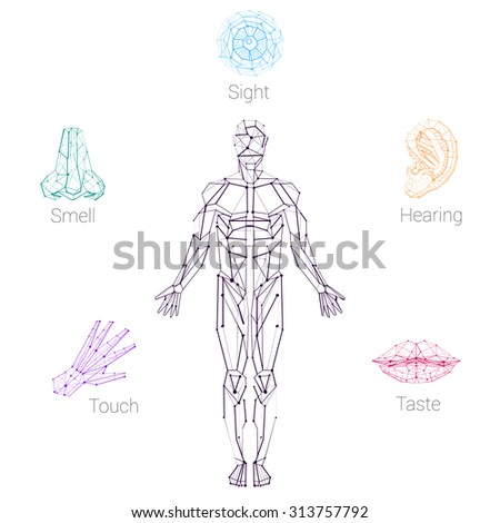 Color five senses hand lips eye stock vector 313757792 shutterstock color five senses hand lips eye ear nose and human ccuart Images