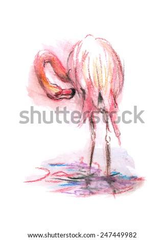 color sketch flamingo - stock vector