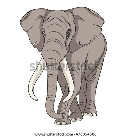 color vector image of an elephant isolated object