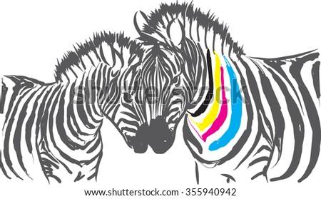 color zebra illustration - stock vector