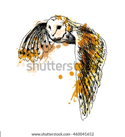 colored hand sketch flying owl