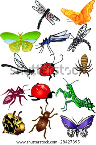 colored insect - stock vector