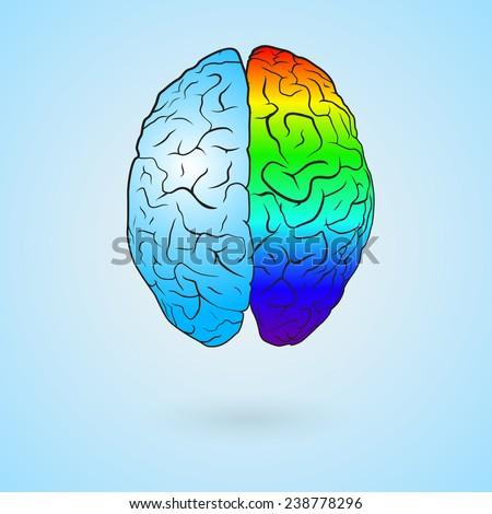 Colored left brain and right brain. Concept illustration. EPS10 vector. - stock vector