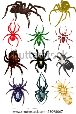 colored spiders
