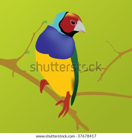 colorful bird sitting on a branch. Image was created in Illustrator using gradient mesh.