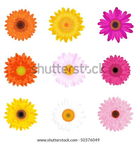 Colorful Daisies, Isolated On White - stock vector