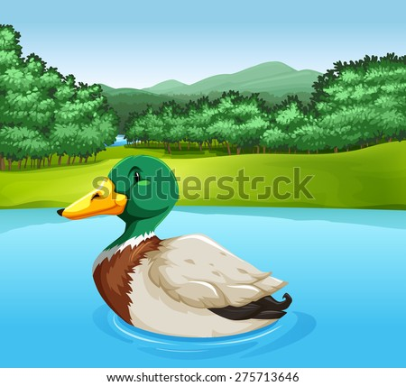 Colorful duck swimming in the lake - stock vector
