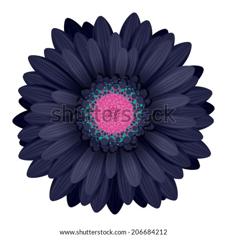 Colorful gerbera flower head - pink and black colors. - stock vector