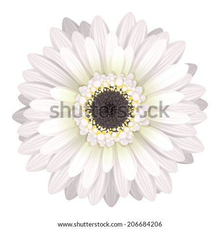 Colorful gerbera flower head - white and black colors. - stock vector