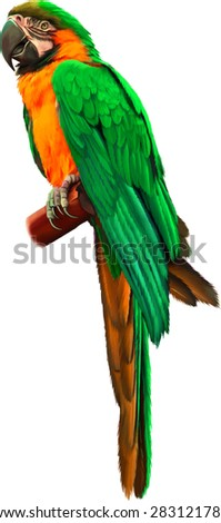 Colorful green and yellow parrot macaw isolated on white background - stock vector