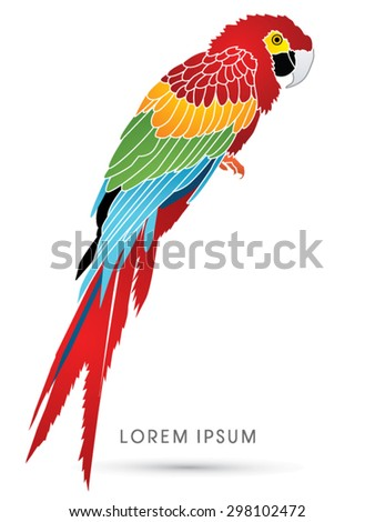 Colorful Parrot, graphic vector. - stock vector