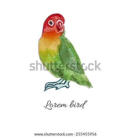 Colorful parrot. Isolated on a white background