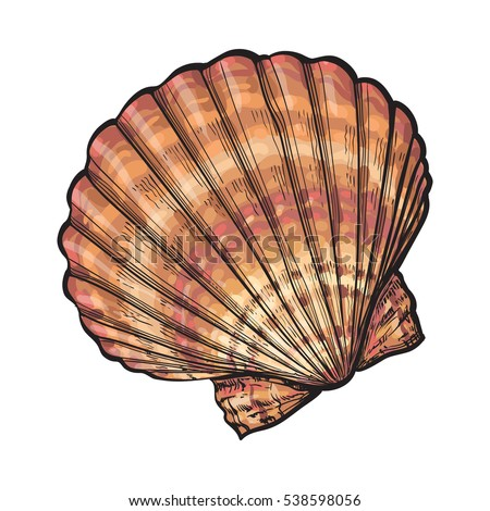 Color Seashell Stock Images Royalty Free Images Amp Vectors