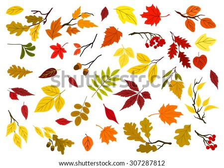 Colorful set of autumn leaves, acorns, berries and tree branches for seasonal design. Isolated on white background - stock vector