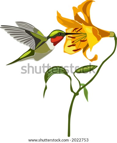 Colorful Tropical bird and flower graphic
