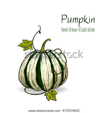 Colorful vector hand drawn illustration of pumpkin.