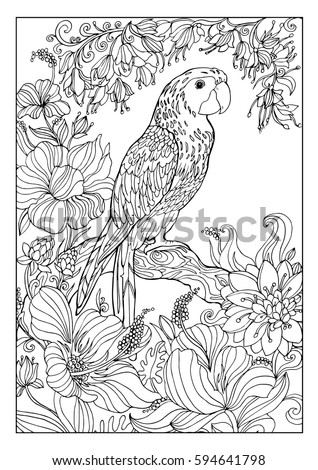 coloring book for adultsa large parrot macaw exotic colors
