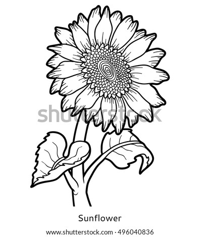 coloring pages of realistic sunflowers | Hand Drawn Realistic Vintage Sunflower Pen Stock Vector ...