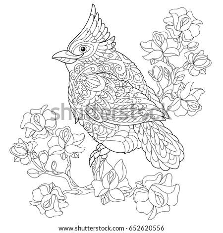 Colouring Pages Kookaburra : Coloring page australian kookaburra kingfisher bird stock vector