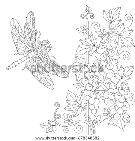 Coloring Page Of Dragonfly And Grape Vine Freehand Sketch Drawing For Adult Antistress Colouring Book