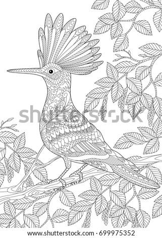 coloring page hoopoe bird upupa epops stock vector 699975352 shutterstock